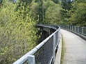 Rail trail through the forested Cascade foothills