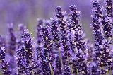 Purple Purple everywhere